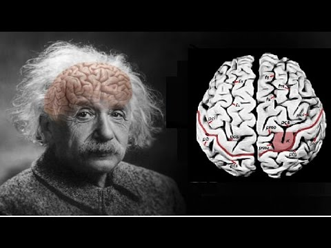 Phát hiện chấn động khi mổ não Einstein Anhxtanh nghiên cứu