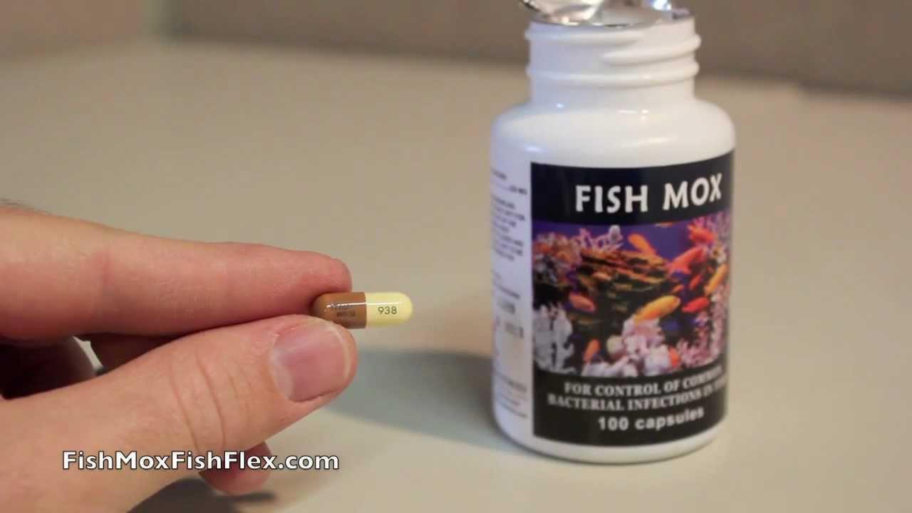 Fish Mox 250 Mg Amoxicillin Fish Antibiotic 100 Count