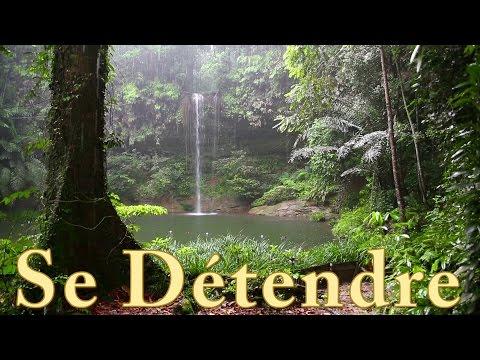 Pluie et les Sons de la Forêt  -