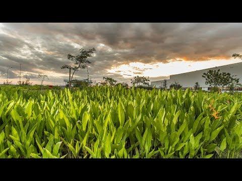 Vídeo JEEP EM GOIANA/PE: A PRIMEIRA PLANTA CARBONO NEUTRO E O DESENVOLVIMENTO SOCIAL DA REGIÃO