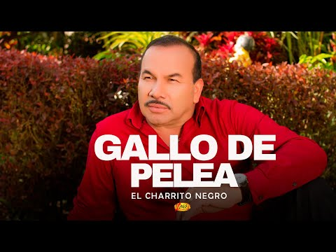 Gallo de Pelea - El Charrito Negro (Audio)