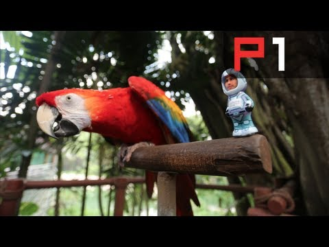 Talking bird predicts winner of the F1 Singapore Grand Prix 2013