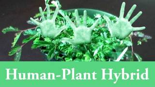 Human-Plant Hybrid (Genetic Engineering At Home)