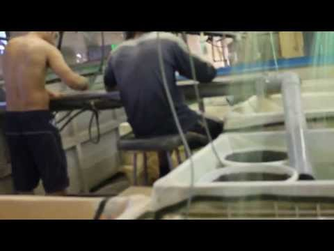 Ornamental Fish farm in Israel; Coy production & breeding