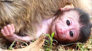 Welcome!! Newborn Baby Monkey today, baby very powerful,Samnnang kh D88