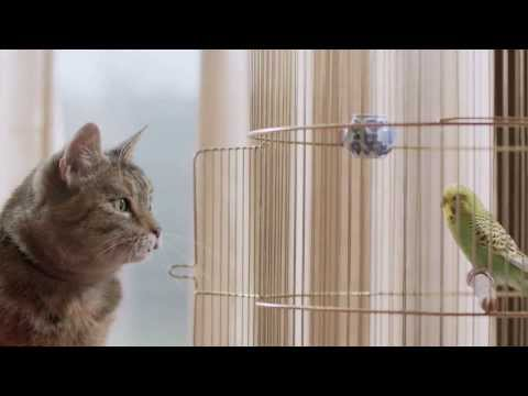 Thumbnail of video Cat & Budgie #catandbudgie