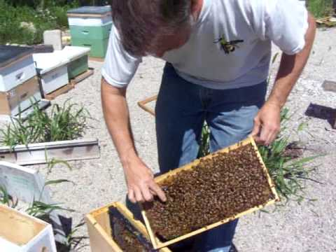 Beekeeping: Packaging a Queen