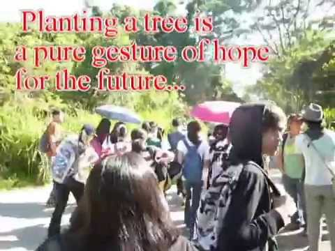 Plant Native Trees in The Philippines!