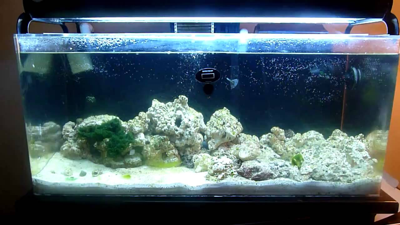 30 gallon saltwater setup 60 gallon saltwater setup 2017 for Saltwater fish for 10 gallon tank