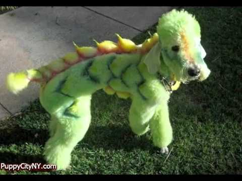 Crazy Dog Grooming!