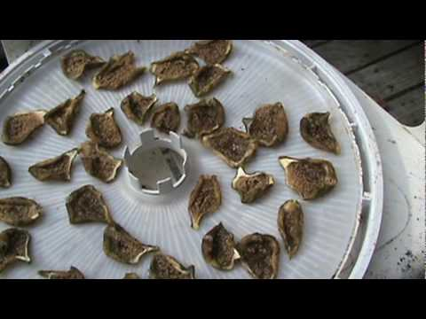 Sun Dried Figs.mpg