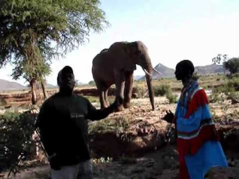 The African Elephant Samburu Game Reserve Real Africa Kenya Tours and Safaris