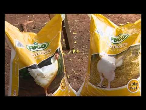 Shamba Shape Up (Swahili) - IR Maize, Biogas, Diversification, Chickens