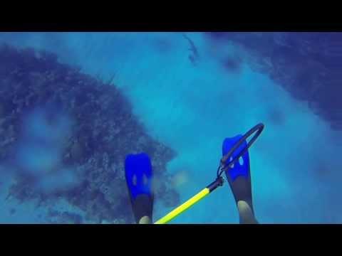 image vidéo un plongeur attaqué par un requin filmé par son GOPRO