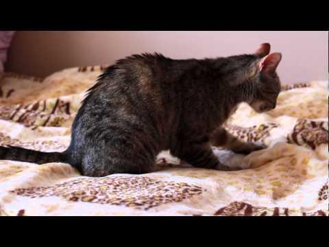 Z życia kota. Śmieszne koty. Ze specjalna dedykacja dla AkinAA1 :))