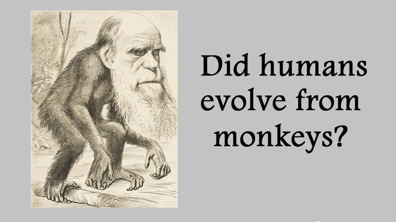 Darwinism vs creationism - Research Paper Example