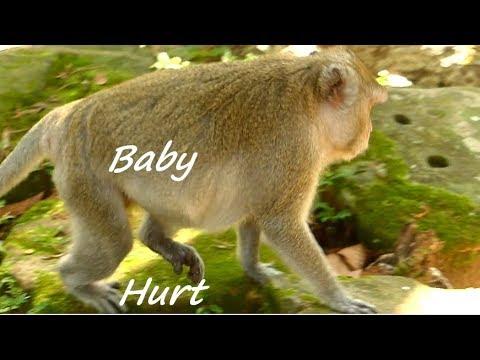 Pity Jane Monkey Hurt Leg | Jane Hungry | Jane Try Walking & Baby Action In Belly | Monkey Crying