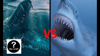 Megalodon vs Mosasaurus, con nào sẽ thắng #22    Bạn Có Biết?