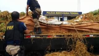 PRF apreende aproximadamente duas toneladas de maconha na BR-381, em Pouso Alegre