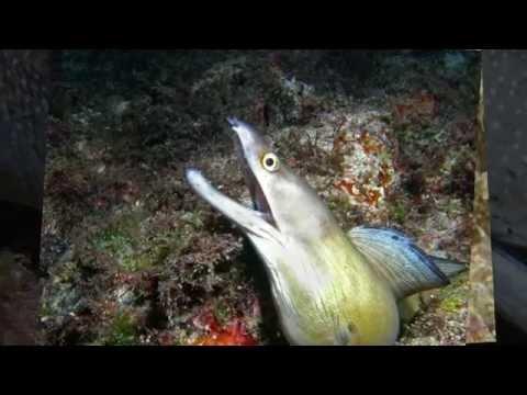 Cabo Verde Diving -- Cape Verde Underwater World