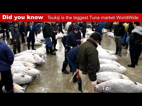 Biggest Tuna Market in the World: Tsukiji Fish Market Tokyo Japan