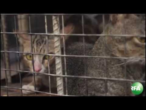 Mua bán và ăn thịt mèo ở Việt Nam