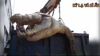 10 con cá sấu khủng nhất Thế Giới thật không thể tin nổi