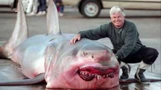 World Biggest Animals!