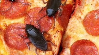 COCKROACHES ON PIZZA!