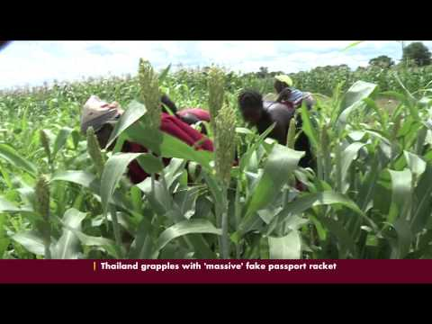 Zimbabwe Young Farmers Clubs