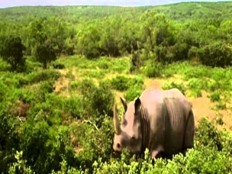rhino scene ace ventura 2 when nature calls 1995
