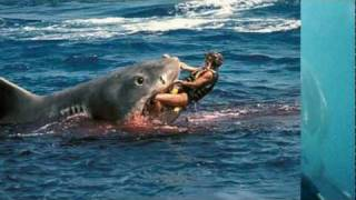 Ferocious WHITE SHARK Fast Killing Machine