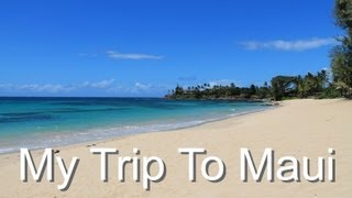 My Trip to Maui (Sea Turtle & Dolphin Video)