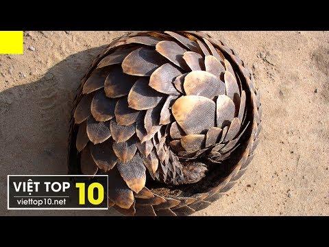 Top 25 Loài Động Vật Có Cách Tự Vệ Và Săn Mồi Độc Đáo Nhất Hành Tinh
