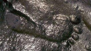 6 Hoá Thạch Khó Tin Khiến Chúng Ta Có Thể Viết Lại Lịch Sử Loài Người | Khoa Học Huyền Bí