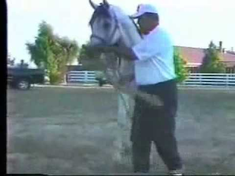 Arabians mating