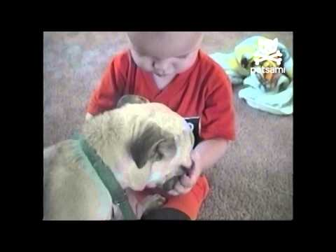 Baby and pug fight over pacifier
