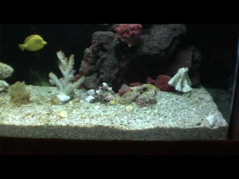 My 750gal saltwater fish tank stingrays and shark for Google fish tank mrdoob