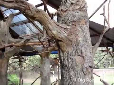 Artificial Concrete Trees In Bird Aviary Youtube