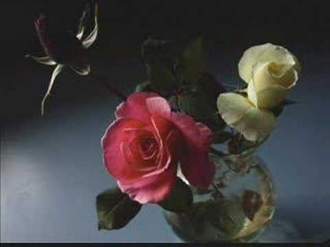 Enya - China Roses