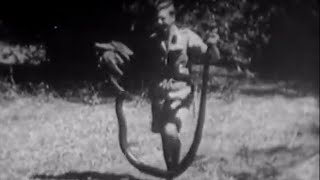 Vintage David Attenborough: Catching a Large Python