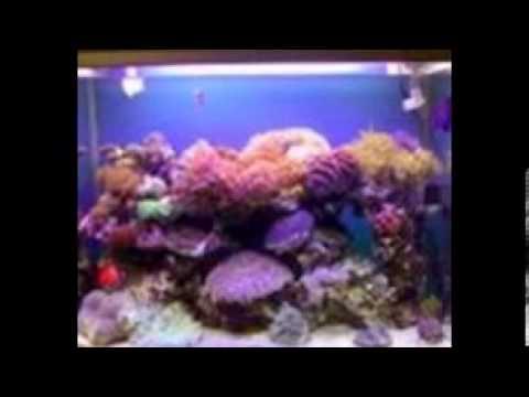 Aquarium Laut dan Dekorasi Aquarium Laut Depok Jakarta Ibu Merie