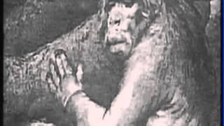 Planéta života - Pôvod človeka
