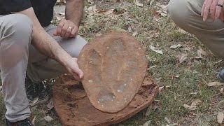 استراليا: العثور على آثار اقدام 21 نوعاً من الديناصورات بعضها غير معروف | قنوات أخرى