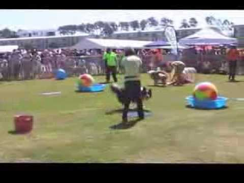 QLD TREIBBALL DEMO 2013