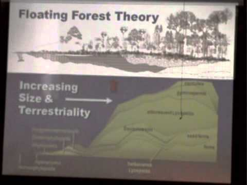Floating Forests: An Example of Creation Model-Building