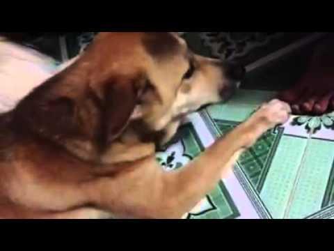 Thanh niên cứng dạy chó gây sốt cư dân mạng