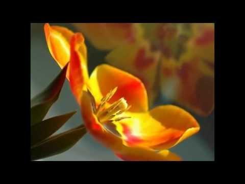 flores,mensagens amizade e carinho.