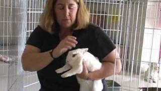 How To Give Your Rabbit All The Care He/She Needs A
