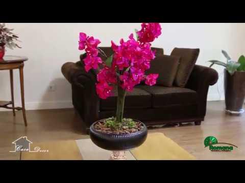 Flores e plantas para decorar a sua casa